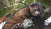 В Эквадоре нашли новый вид млекопитающих, а в Турции вывели кроликов, которые светятся в темноте