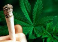 В Киргизии предлагают легализовать марихуану