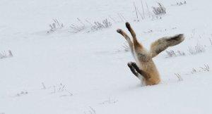Опубликованы фотоработы финалистов конкурса Сomedy Wildlife Photography Awards