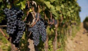 Биодинамическое вино. Природное земледелие. Итальянское вино, созревающие под пение григорианских монахов...