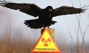 31 год назад произошла авария на Чернобыльской АЭС