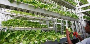 Вертикальные фермы Plenty дают в 350 раз больше урожая