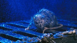 """""""На очереди чума, а потом инквизиция"""": крысы атакуют заваленный мусором Львов"""