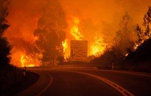 В результате лесного пожара в Португалии погибли 57 человек