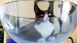 [Пятничное] Лауреат Шнобелевской премии доказал, что кошки бывают жидкими