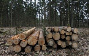 Суд ЕС обязал Польшу платить €100 тыс. штрафа в день за вырубку Беловежской пущи