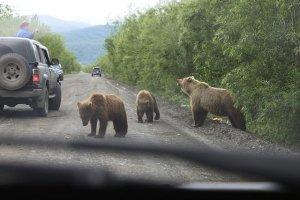 """""""Историям о том, что у нас мало медведей, не верьте"""""""