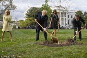 Испарился дуб, подаренный Трампу Макроном