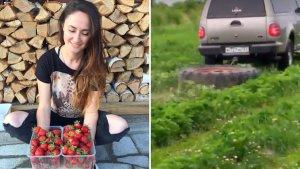 В Хабаровском крае на экс-чиновника завели дело после уничтожения урожая клубники