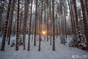 В Хабаровском крае трехлетний ребенок смог в одиночку выбраться из тайги ( ....мальчик прошел около трех километров...... в ту ночь было около минус 35 градусов)