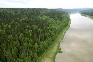Запасов древесины в Сибири при существующей системе заготовок хватит на 15 лет