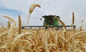 Налоговики раскрыли схему, использованную калининградскими экспортерами зерна. Ущерб оценивается в сотни миллиардов долларов!