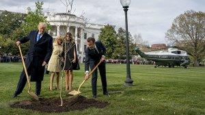 Посаженный Трампом и Макроном дуб погиб.