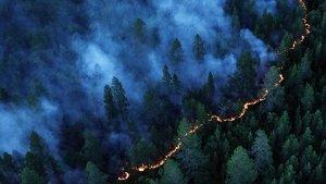 В четырех регионах ввели режим ЧС из-за лесных пожаров