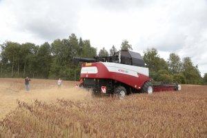 В Томской области провели успешный эксперимент по уборке урожая беспилотным комбайном