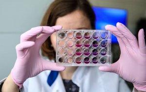 Виагра выманила кроветворные клетки из костного мозга в кровь