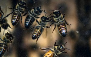 Пчелы научились считать