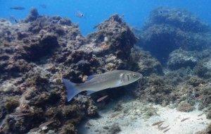 Углекислый газ помог рыбам переносить недостаток кислорода