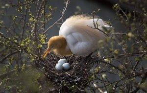 Ученые выяснили, почему птичьи яйца бывают разных цветов