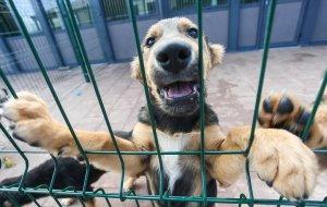Дружелюбие пса стало причиной смерти его хозяина