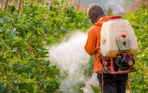Популярные пестициды помогли шмелям