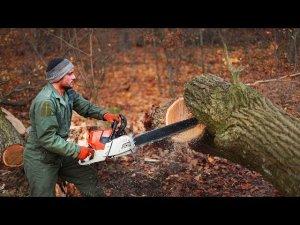 Зрелищная валка и резка огромных деревьев. Опасная захватывающая работа лесорубов - арборист.