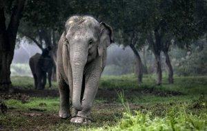 Ученые сравнили прочность волос человека и шерсти слона. Наши прочнее
