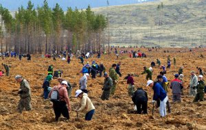 Массовые посадки лесов заставили реки обмелеть