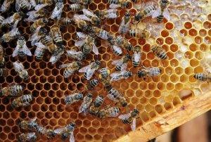 Мед из Башкирии поставляют на МКС