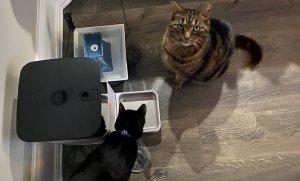 Из-за неполадок на серверах компании Petnet кормушки SmartFeeder перестали давать еду домашним питомцам по расписанию