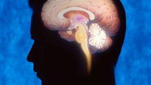 Обнаружена область мозга, отвечающая за сексуальное влечение у мужчин