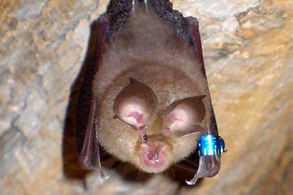 [Фейк или правда?] 2015 год: Ученых напугал успешный эксперимент по переделке вируса летучих мышей