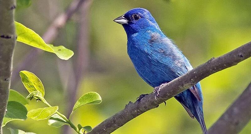 Почему в дикой природе так много синего цвета: магия физики