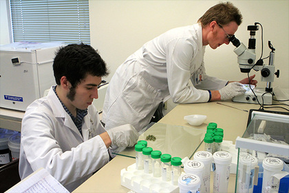 Американские ученые создали суперантибиотик