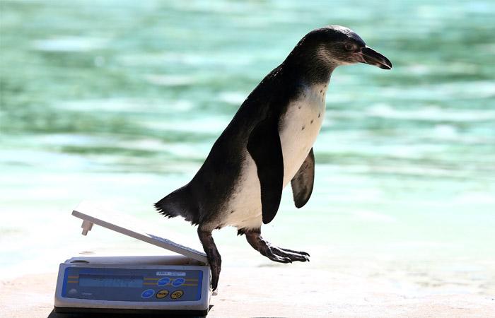 В Чили свернули горнорудный проект стоимостью $2,5 млрд ради безопасности пингвинов