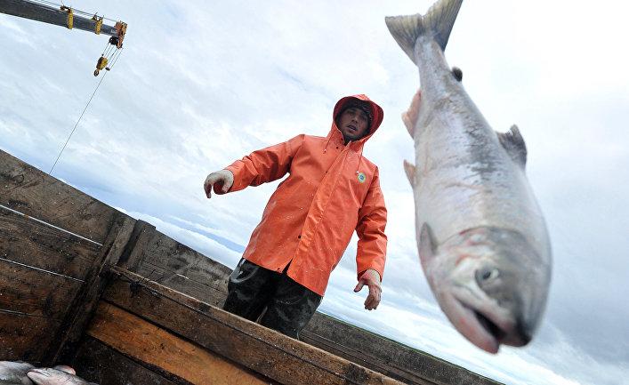 """Убивайте их: """"русские лососи"""" вторглись в Норвегию (Dagbladet, Норвегия)"""