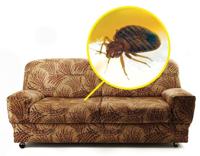 """""""Вытрясти клопов"""": в Мосгоризбиркоме объяснили, почему охрана вынесла диван с Соболь на улицу (Мосгоризбирком подаст заявление в СК на Соболь)"""