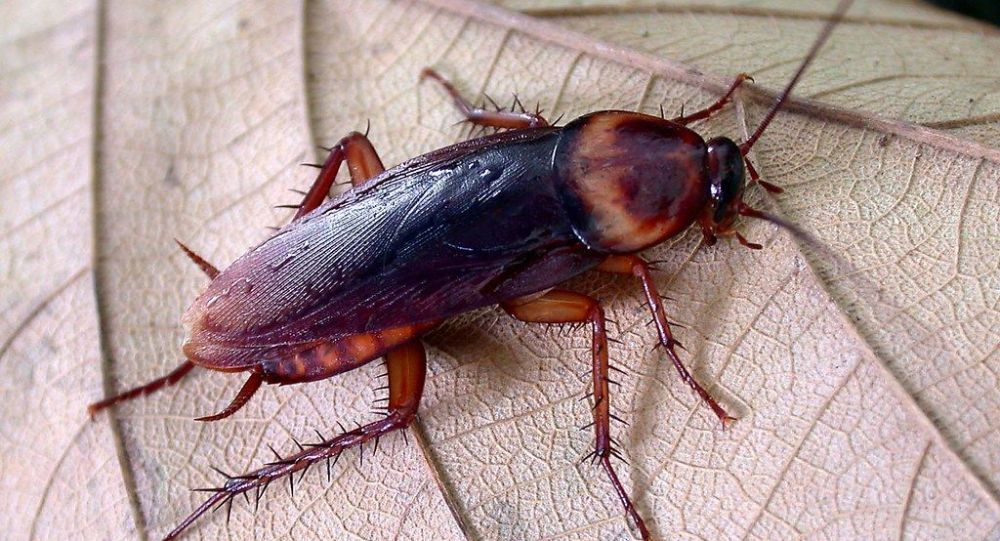 Атака летающих американских тараканов на Сочи пока не тянет на диверсию