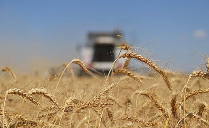Россия - зарождающаяся сверхдержава в области мировых продовольственных ресурсов: с июля 2016 года по июнь 2017 года страна экспортировала 27,8 миллиона тонн пшеницы, что больше, чем весь Евросоюз