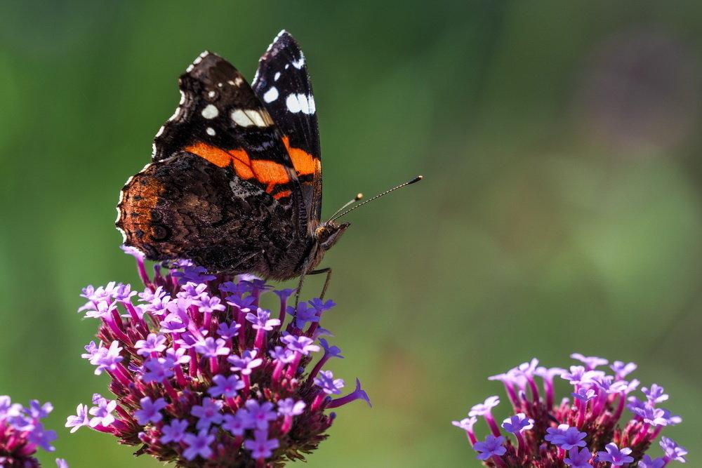 """Энтомологи заявили о начале """"апокалипсиса среди насекомых"""": в Германии общая биомасса летающих насекомых сократилась на 76%, что уже сократило популяцию питающихся ими в долине Рейна птиц Голландии"""