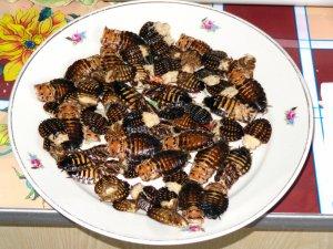 На Украине курсантов кормили тараканами и червями