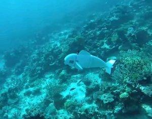 Ученые создали робота-рыбу для изучения подводного мира