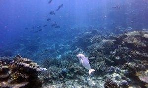Робот-рыбка пошпионит за живыми собратьями