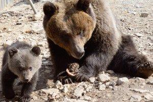 Шведские медведи нашли способ борьбы с охотниками