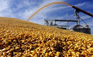 Россия может ввести пошлины наэкспорт кукурузы…