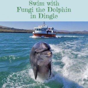 Путина обвинили в пропаже известного ирландского дельфина…