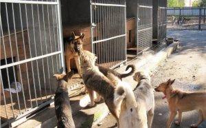 Правила строительства приютов для животных разработали в…