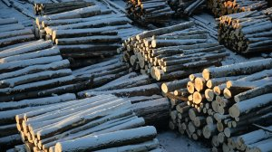 Мишустин утвердил Стратегию развития лесного комплекса до 2030…
