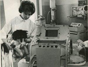Рассекречены документы о полете собак в радиационный пояс…