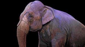 Слон напал на рабочего в цирке в…